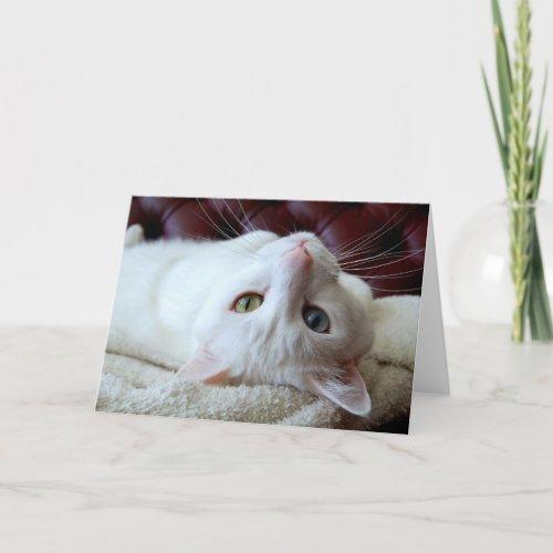 Valentine Turkish Angora Cat Odd Eyes Card card