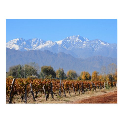 Vineyards In The Fall Of Mendoza, Argentina Postcard