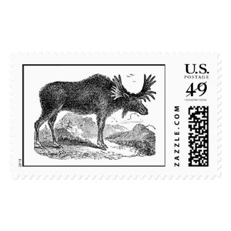 Moose Gifts on Zazzle