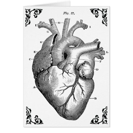 anatomical heart diagram 2001 ford focus engine vintage gothic card zazzle com