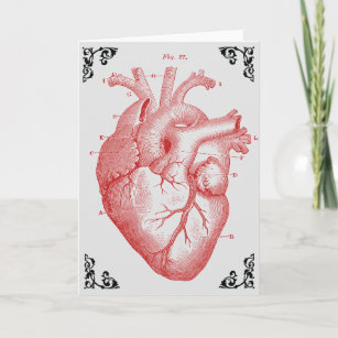 anatomical heart diagram honeywell thermostat 4 wire cards zazzle vintage victorian greeting card