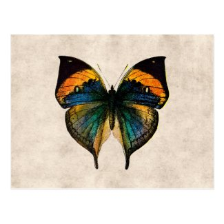 Vintage Butterfly Illustration 1800's Butterflies