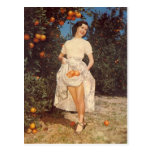Vintage Florida Oranges Post Card
