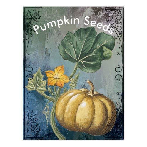 Vintage Pumpkin on Vine Postcard