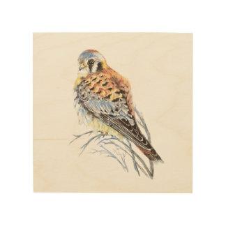 Sparrow Hawk Art & Framed Artwork