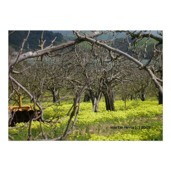 Watsonville Orchard Poster