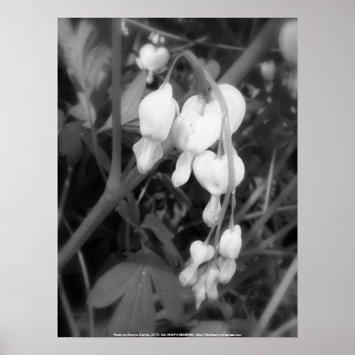 white bleeding hearts, black and white print