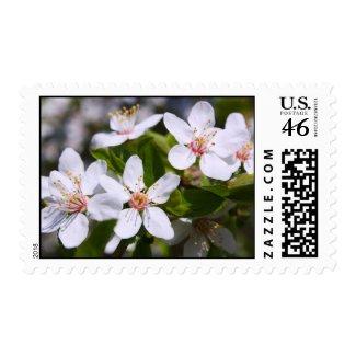 White blossoms zazzle_stamp
