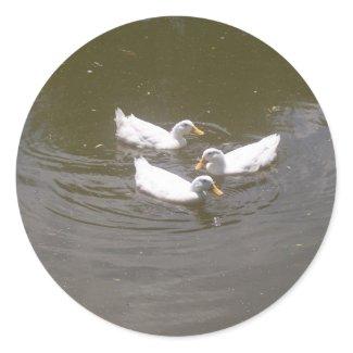 White Ducks Swimming Stickers sticker