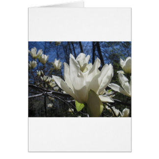 White Magnolia in North Carolina Card