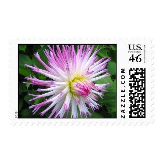 White pink dahlia - Postage