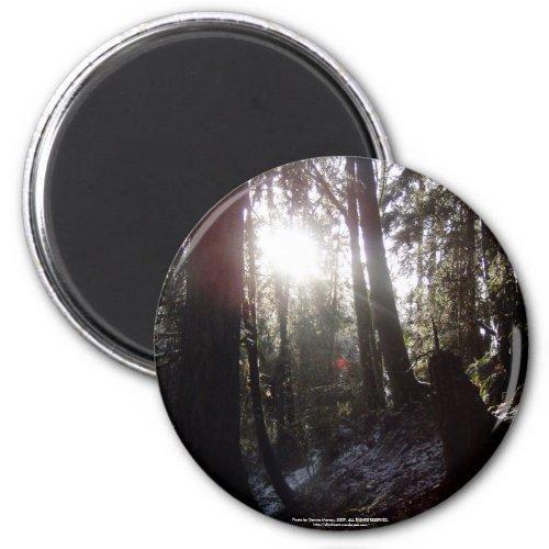 Winter Sunrays #16 magnet