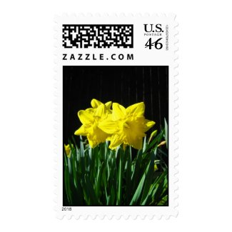 Yellow daffodils zazzle_stamp