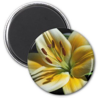 Yellow Lily Magnet magnet
