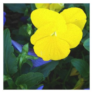 Yellow Pansy Spring Flowers Floral Canvas Art wrappedcanvas
