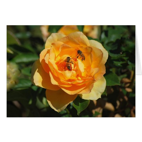 Yellow Rose With Honeybees Card card