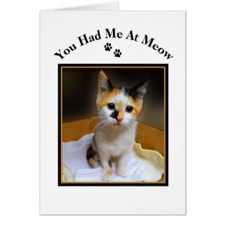 You Had Me At Meow Calico Kitten Greeting Card