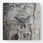 Young Maple Tree Bark 0041 Square Wall Clock