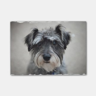 Schnauzer-Hund