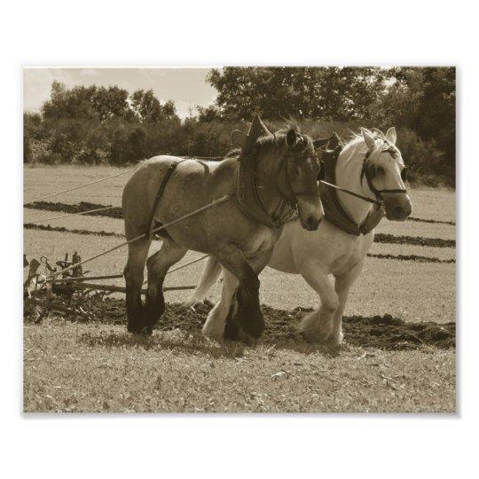 Impression Photo quipe de cheval de trait dans le harnais  Zazzlefr