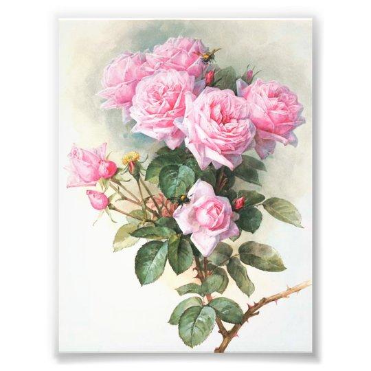 Impression Photo Peinture rose vintage de roses  Zazzlefr