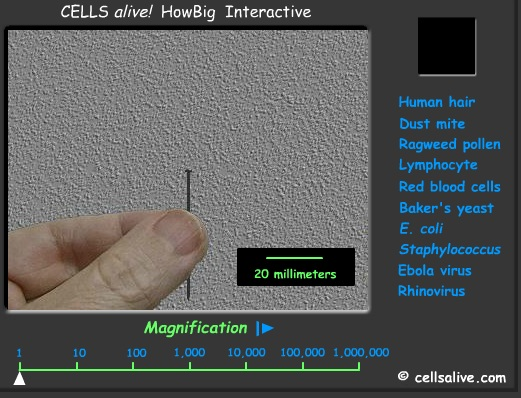 3d Animal Cell Diagram Cells Rumney Marsh Academy Science Revere