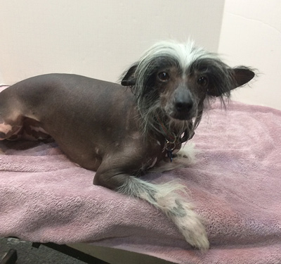 Chinese Crested Pepe