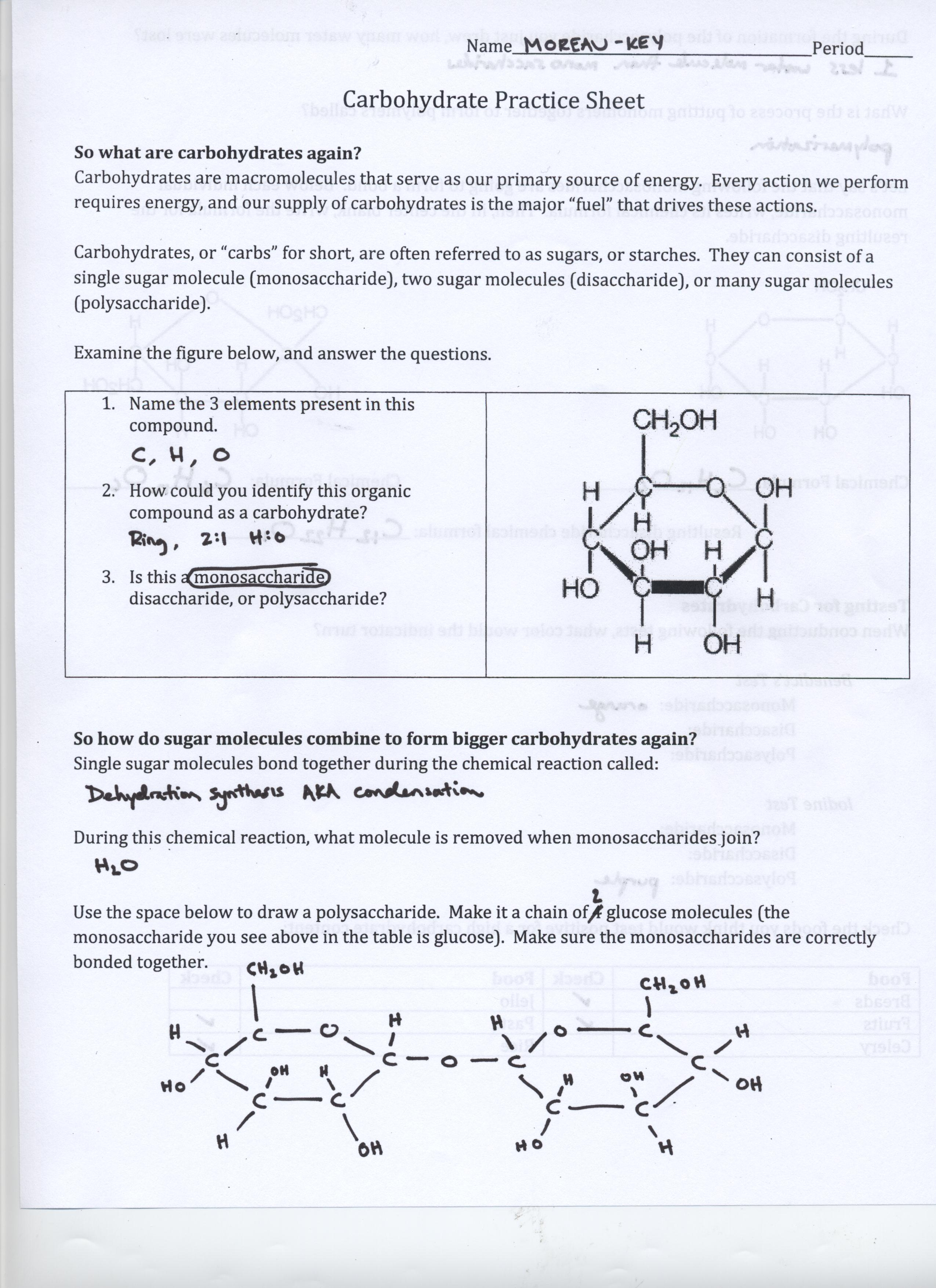 Cellular Respiration Worksheet Answer Key Pogil