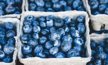 blueberry-fellowship