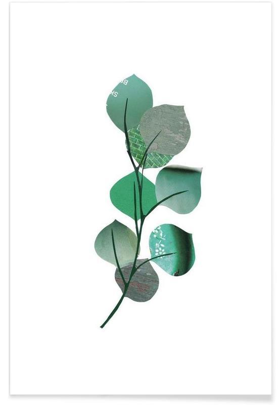 Eukalyptus Poster  JUNIQE