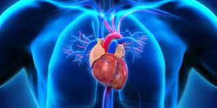 cardiovascular corazon
