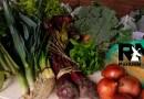 Llegaron verduras orgánicas del INTA a la villa