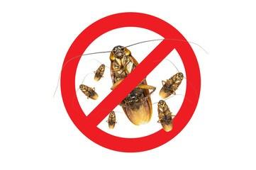 stop roach