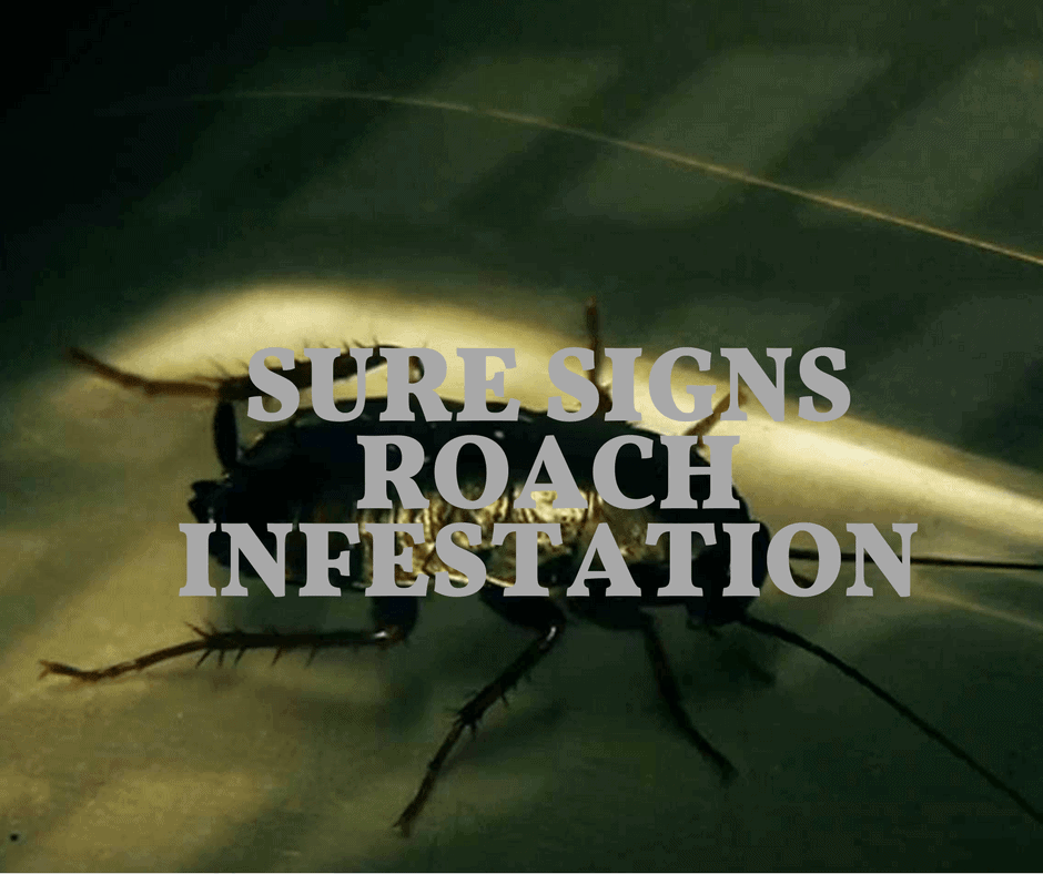 sure signs roach infestation
