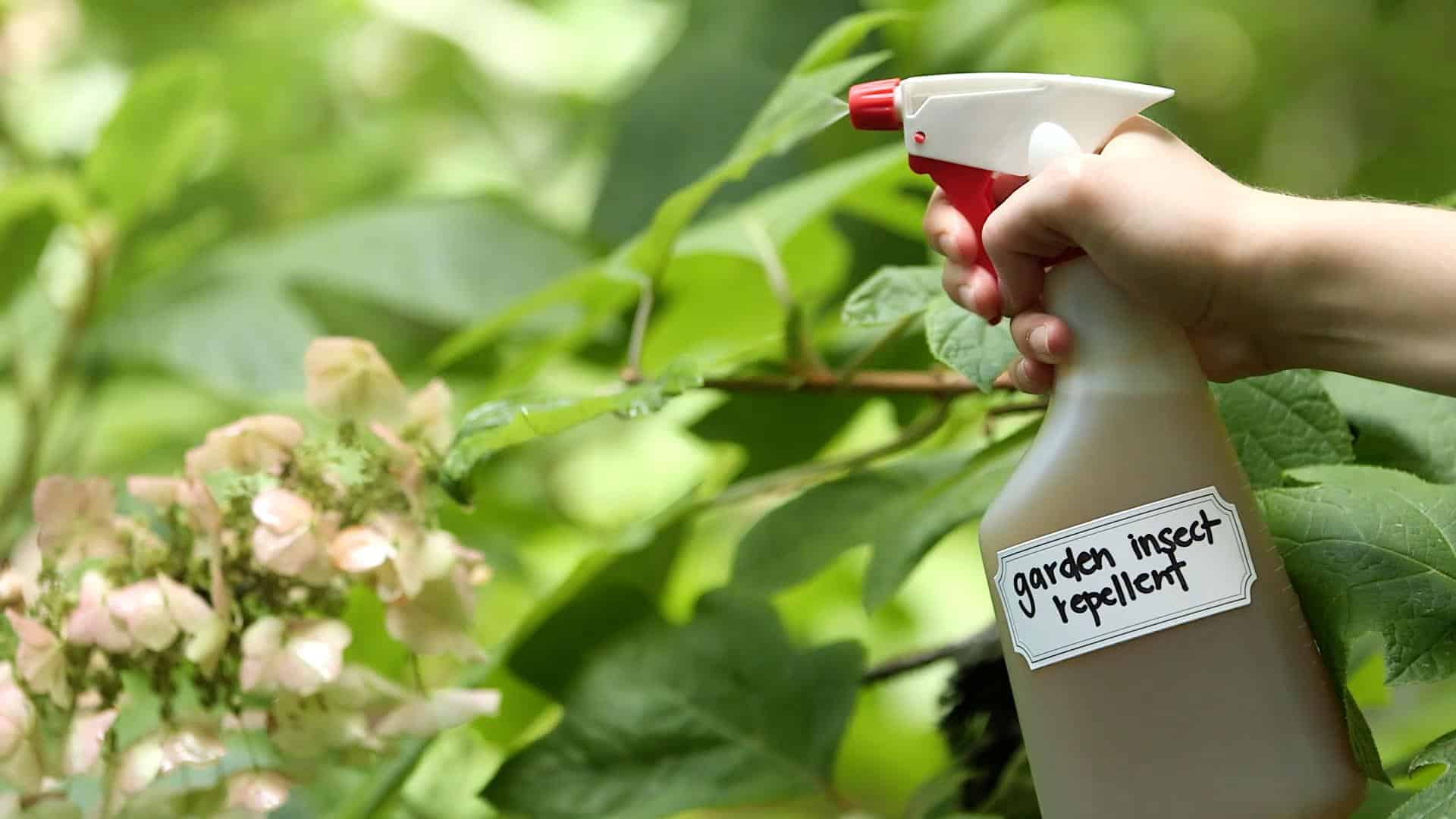 Best Bug Spray Treatments Reviews for Home Pest Control
