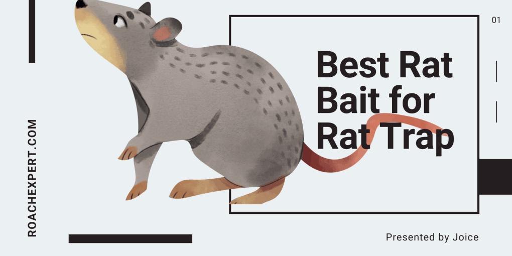 Best Rat Bait for Rat Trap