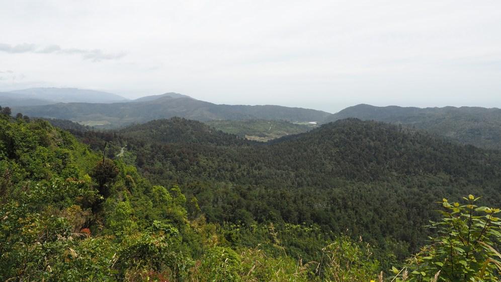 Regenwald südlich von Karamea