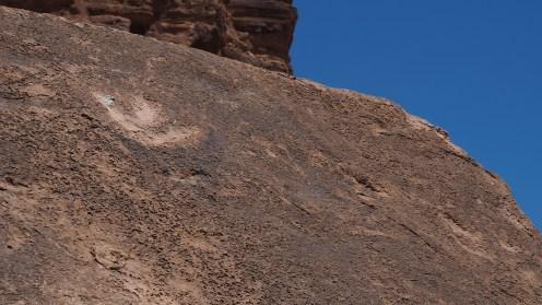 Versteinerte Dino Spuren
