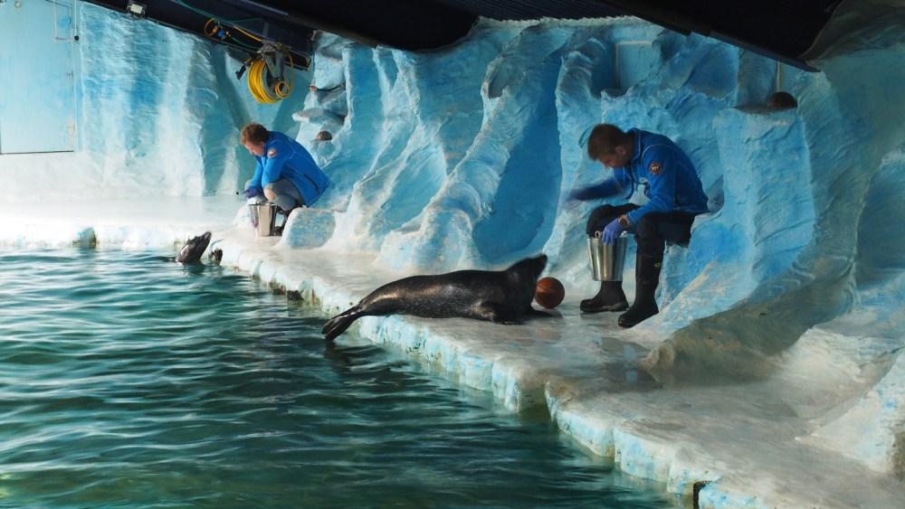 Arktisches Aquarium in Tromsø