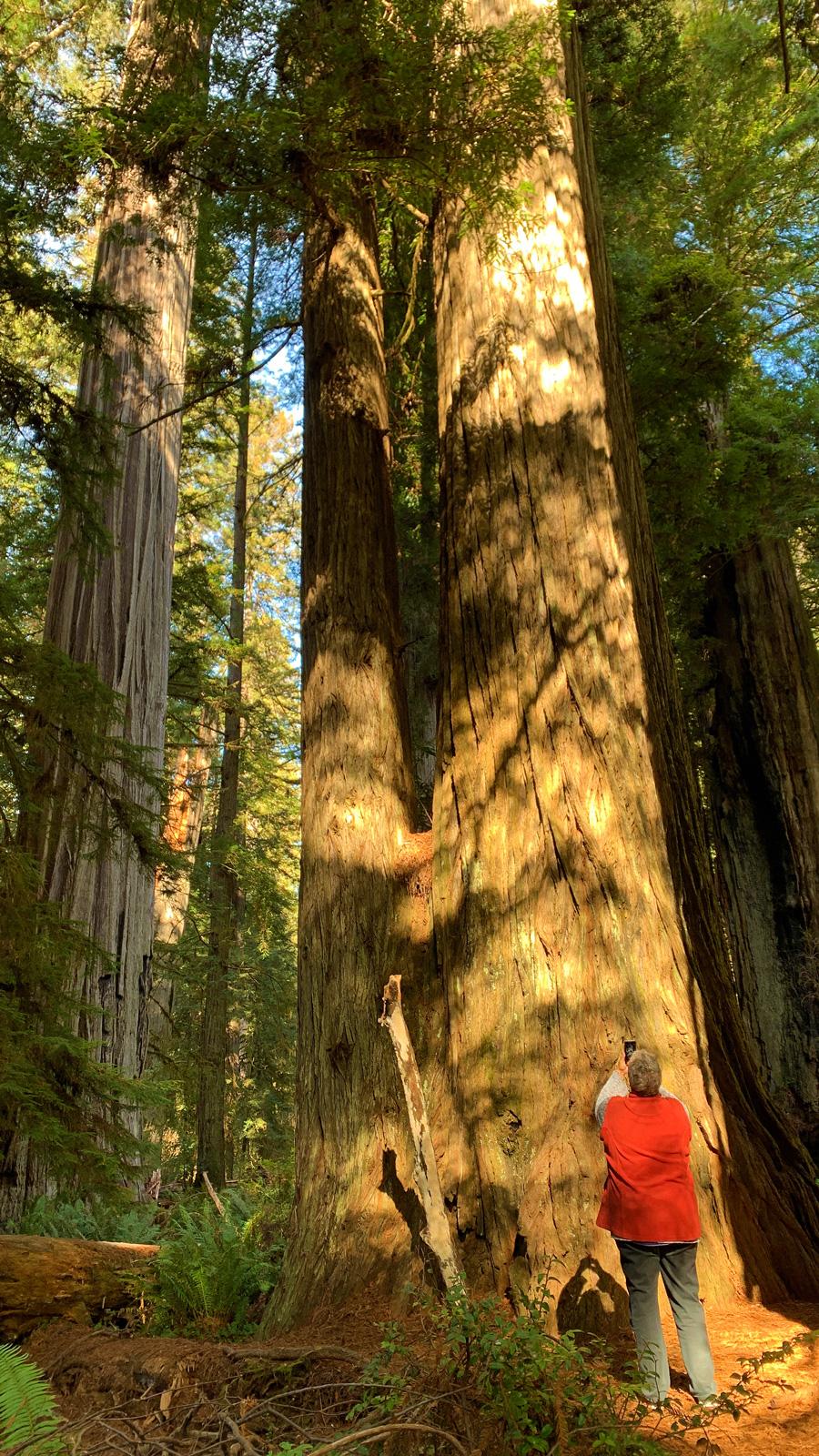 Redwood Nationalpark