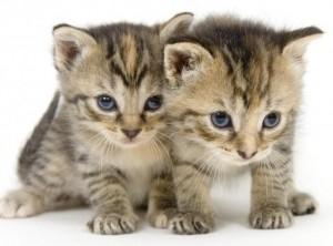 Most-Beautiful-Kitten-Photos3