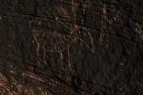 Petroglyph for antelope