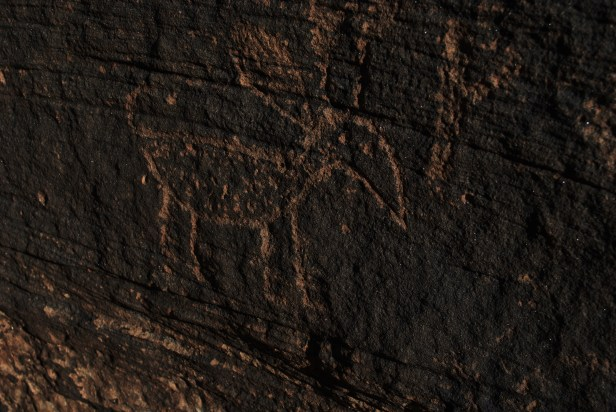 Petroglyph for antelope