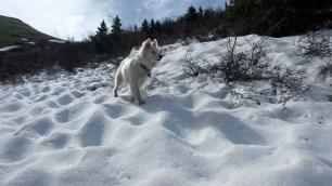 Taz in the snow.