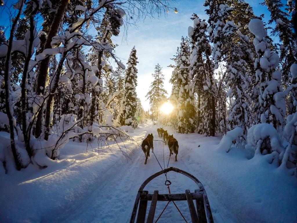 Dogsled Landscape Photography