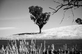 Landscape-10