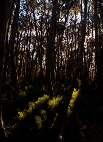 Landscape-11