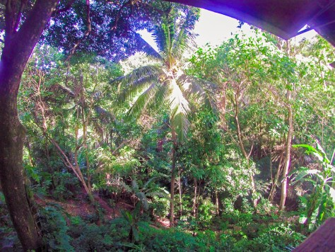 The dense jungle outside my open 'window'.