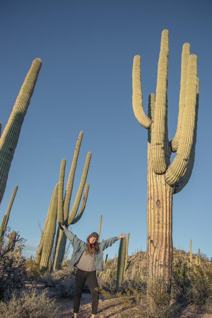 Cactus géants