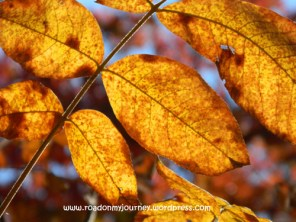 close-up on red-brown-gold leaves in the sun